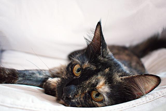 Tortoiseshell cat folklore